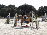 CLASES EQUITACION/ PONY CLUB/ PASEO CAMPO MADRID - Deportes - Madrid